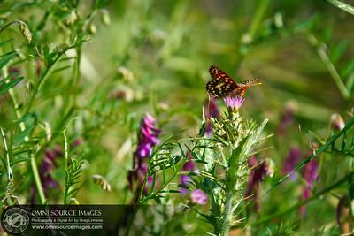Butterfly Sunol-Ohlone Regional Wilderness