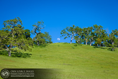 Hiking Sunol Ohlone Wilderness in Spring