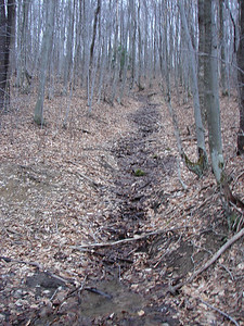 Spring runoff, the modest beginnings of a stream.