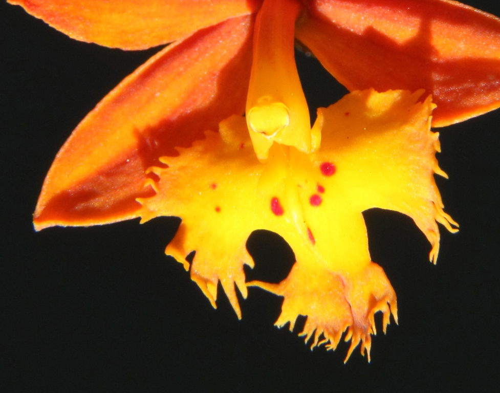 This orchid blooms in my front yard, not at the Viera Wetlands, but it was part of my macro work so I included it here.