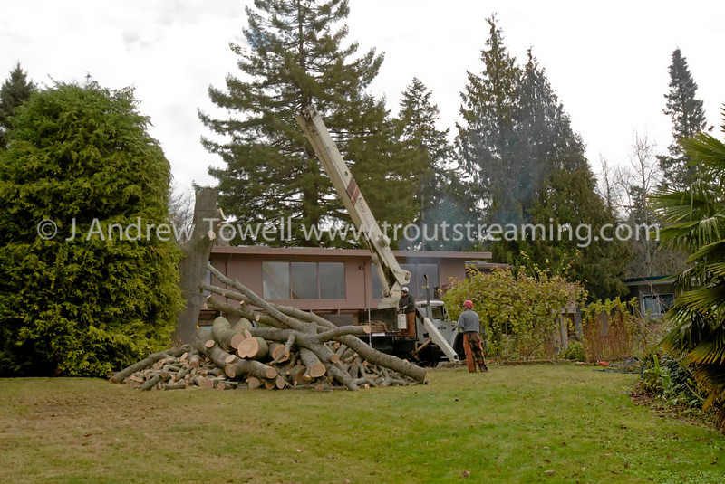 Snapshot gallery of images from Woodway WA. Splitting in the crown of this oak tree neccesiated that it be removed before strong winds brought it down on top of the house. A crane was used to remove pieces of hte crown, without damaging the house. Images were acquired as RAW files and have been been batch processed for display on the web. Image Copyright © 2007 J. Andrew Towell All Rights Reserved. Please contact the copyright holder at troutstreaming@gmail.com to discuss any and all usage rights.