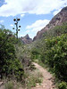 "THE TRAIL GOES ON<br /> As we continue on down the trail, we'll pass several agave plants with bloom stalks jutting high into the air. The one up ahead is an old one, which has long since died off. The agave is also called the ""Century Plant,"" which in mythology is believed to grow for 100 years only to flower and die. The agave does indeed die after flowering, but its typical life span is usually only around 25 years. The name ""Quarter-Century Plant"" just wouldn't quite cut it."