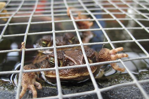 09-08-19 Toads