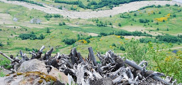09_ June 3_  Mount St Helens0007