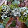 Miniature moss-and-lichen garden.