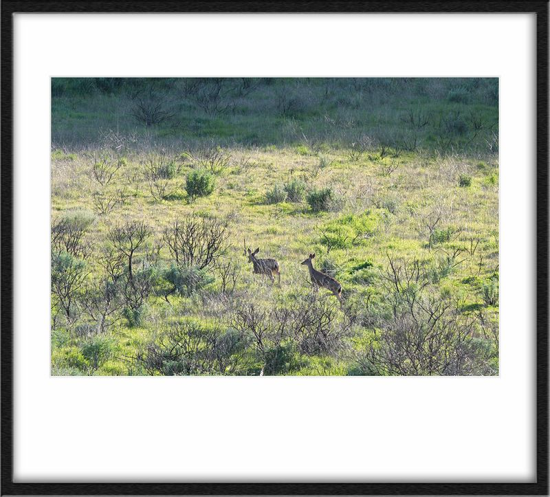 Where's Waldo, with Deer!<br /> We were just driving along, when Mae spotted these in the distance. Having just got the lens, I was still fumbling around when they appeared and most of the shots of them weren't very good ;).