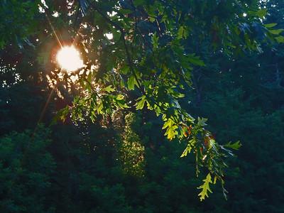 100629-Sunset at Kurtz Park
