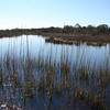 The Chesapeake Bay estuary is the world's densest biomass/bioproduction area - superior to the Amazon rainforest.