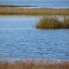 Love the apposite dense sparsenesses, marsh grass and ripples.