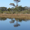 I like the savannah-character of this tree - a sparse, austere landscape, despite all the water.