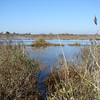 Looking back - I've been wading knee-deep through a flooded marsh.