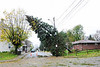 20121030_Catty_Tree_012_out