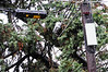 20121030_Catty_Tree_014_out
