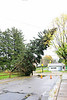 20121030_Catty_Tree_009_out