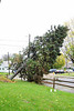 20121030_Catty_Tree_004_out