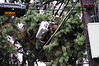 20121030_Catty_Tree_013_out