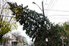 20121030_Catty_Tree_016_out