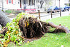 20121030_Catty_Tree_017_out