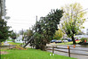 20121030_Catty_Tree_005_out
