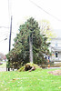 20121030_Catty_Tree_002_out