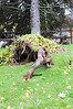 20121030_Catty_Tree_003_out
