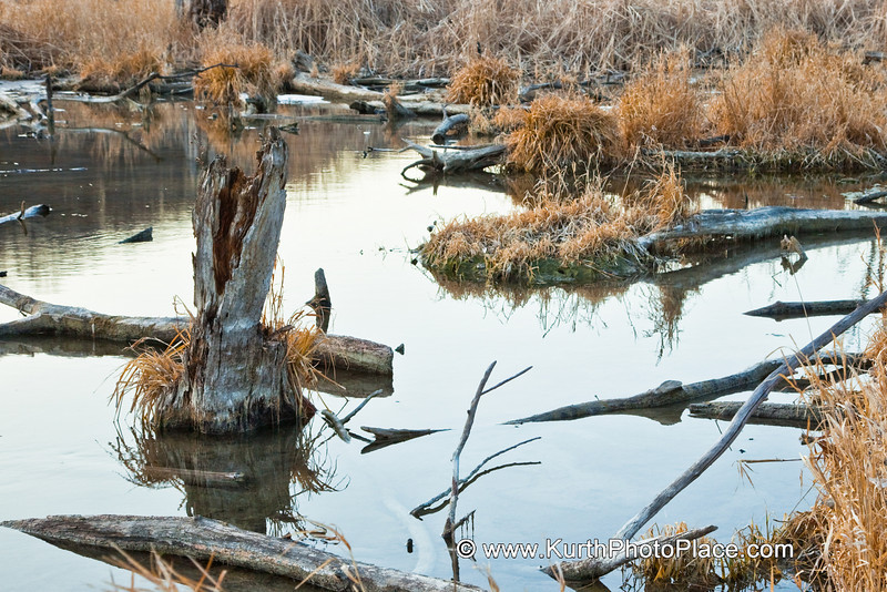 Beaver activity has altered this habitat.  The water is more shallow now.