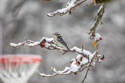 11-16-2018 Birds in the Magnolia
