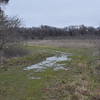Break in treeline between upper and lower meadow near the new wetland pond - lots of standing water