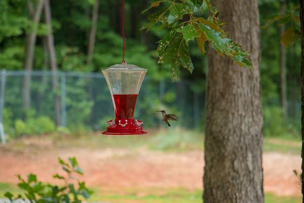 14-0720 Hummingbird Visit