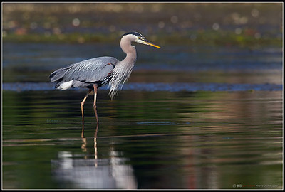 GBH Wading