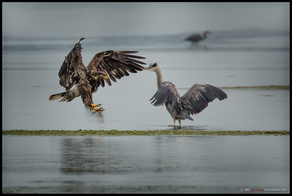 Young Eagle and GBH