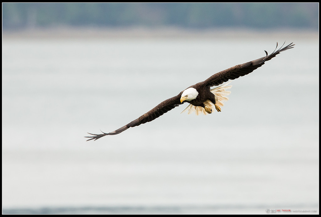 Eagle Banking