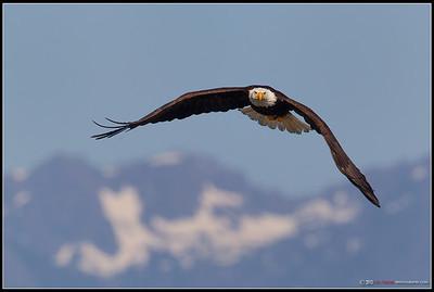Olympic Eagle