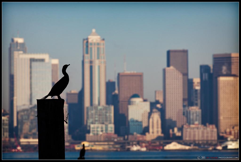CityBird 1