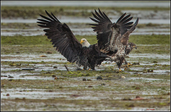 Eagles Squabble