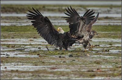 Eagles Squabble