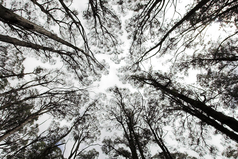 Looking up into the sky. Help! The trees are falling in on me!