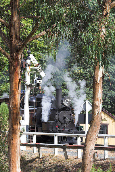 Belgrave Station, where our walk in the Dandenongs began is just near Puffing Billy's Station.