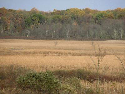 2007.11.3 - Sand Hill Cranes: Haehnle Sanctuary