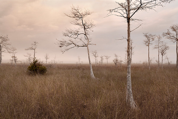 2008 Big Cypress Swamp
