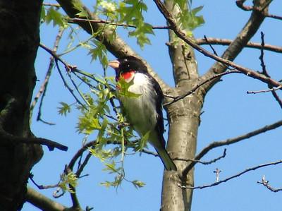 2008 Birds (2) - Apr-Jun