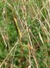 Praying Mantiss @ Lost Valley Trail