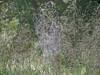 Spider Web @ Shaw NR