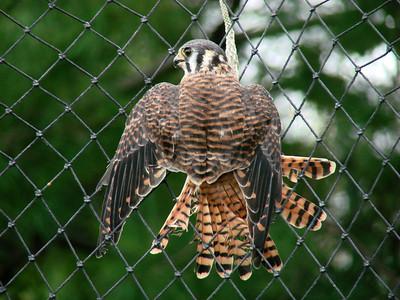 2008 Birds (3) - Jul-Sep