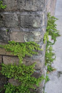 Corner Plants 3