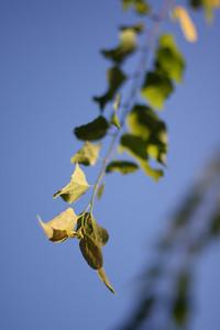 Leaf Spray 1