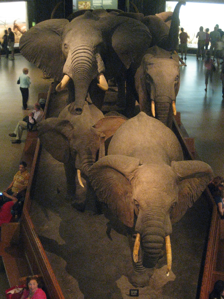 Hall of African Mammals - view of the 2nd floor from the 3rd floor