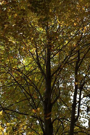 2009-10-11 Fall Leaf Peeping