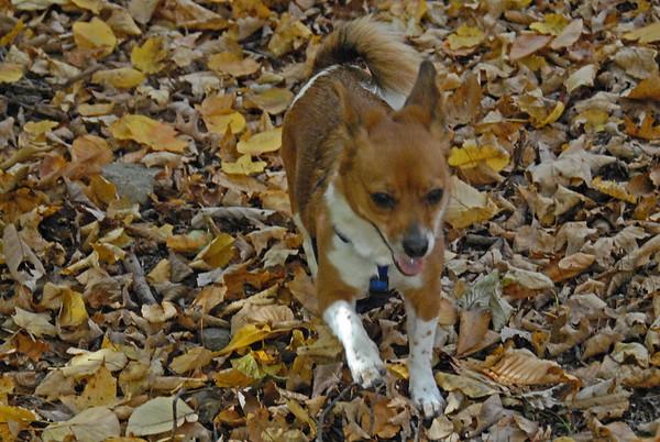 2009-10-22 Hike With Dogs to Wildcat Ridge Hawkwatch, Rockaway, NJ