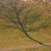 platonic trees